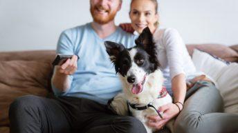 Mann und Frau mit Hund auf Couch
