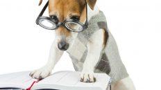 Hund mit Brille liest in einem Buch
