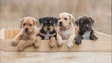 Welpen und Junghunde Bildunterschrift