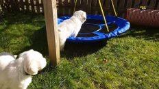 Welpen spielen im Garten