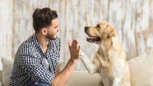 Hund klatscht Mann ab. Szene aus Hundetraining und Hundelehrfilmen