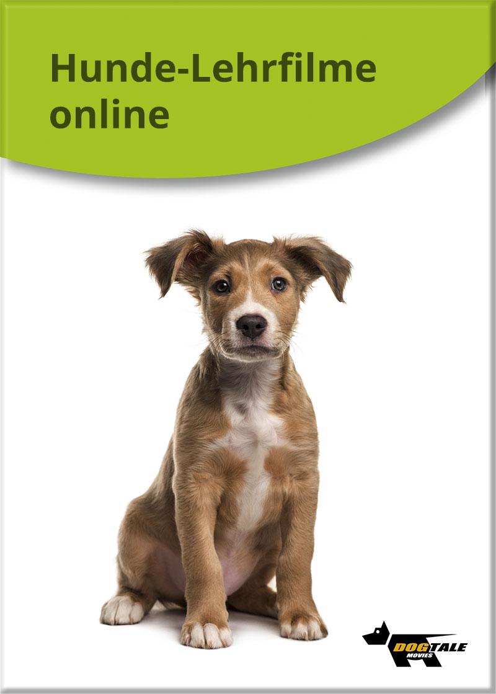 hunde-lehrfilme-cover