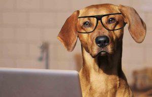 Der schlaue Dogtale Movies Hund